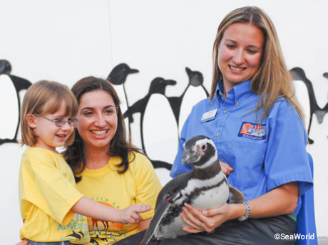 seaworld-orlando-summer-camp-penguins.jpg