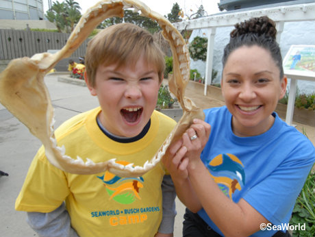 seaworld-orlando-summer-camp-shark-teeth.jpg