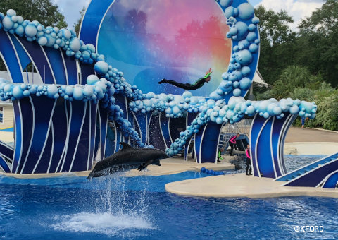 seaworld-orlando-touch-the-sky-dolphin-trainer-soar.jpg