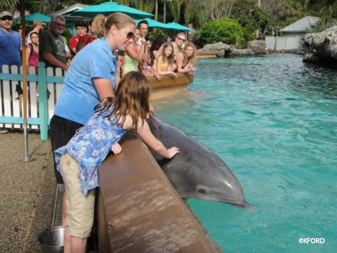 seaworld-petting-dolphin.jpg