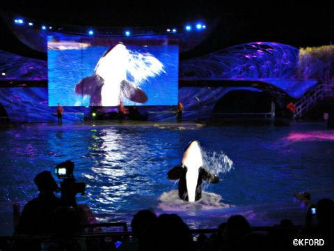 SeaWorld's Summer Nights