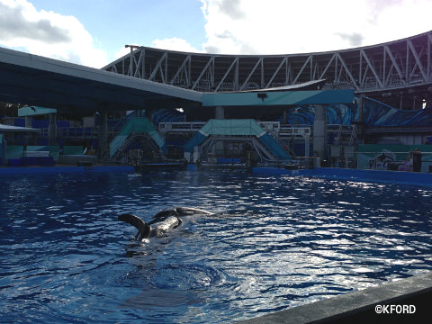 seaworld-shamu-up-close-backstage-pool.jpg