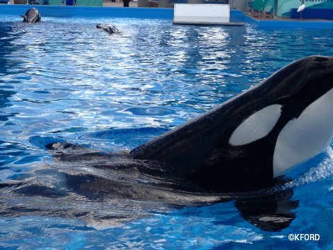 seaworld-shamu-up-close.jpg