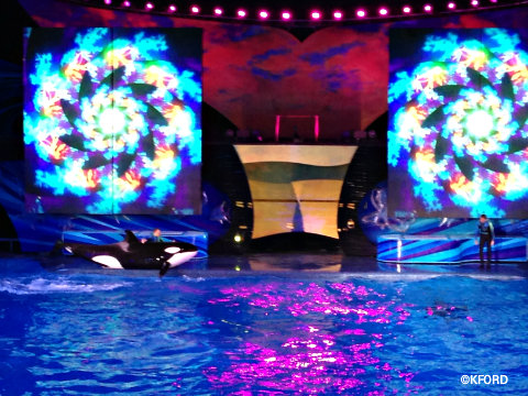 seaworld-shamus-celebration-2.jpg