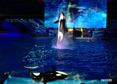 seaworld-shamus-celebration-4.jpg