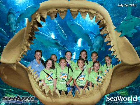 seaworld-summer-camp-2015-shark-encounter.jpg