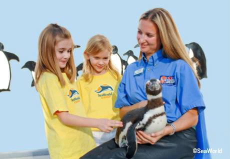 seaworld-summer-camps-penguins.jpg