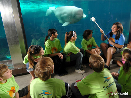 seaworld-summer-camps-training.jpg