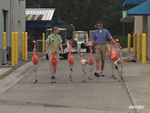 seaworld-wild-days-flamingo-walk.jpg
