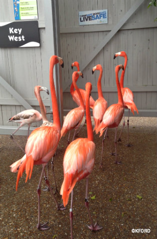 seaworld-wild-days-flamingos-head-out.jpg