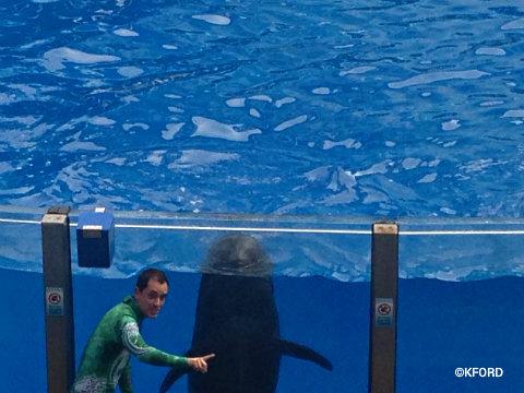seaworld-wild-days-pilot-whale.jpg