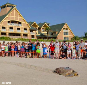 tour-de-turtles-vero-beach.jpg
