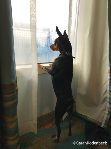 walt-disney-world-hurricane-irma-dog-in-room.jpg