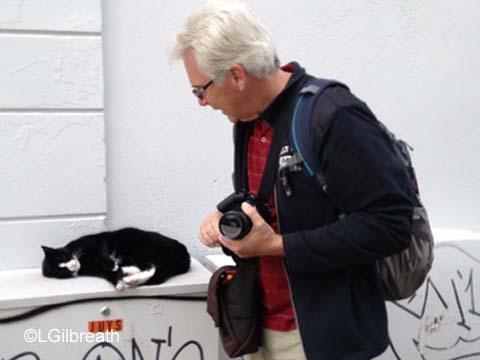 Bergen cat