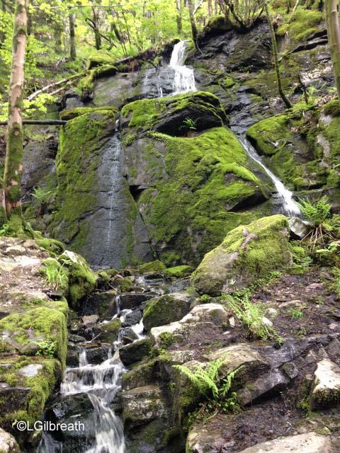 Mt. Floien trail