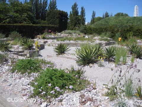 Malmo waterwise garden