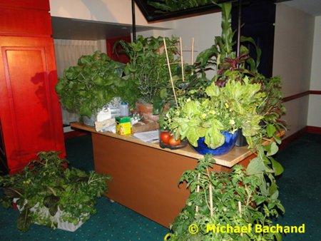 Garden Presentation