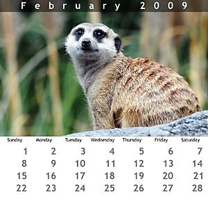 February 2009 Jewel Case Calendar
