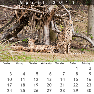 April 2011 Jewel Case Calendar