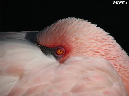 Animal Kingdom Flamingo