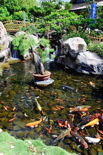 Japan Koi Pond with Polarizer Filter