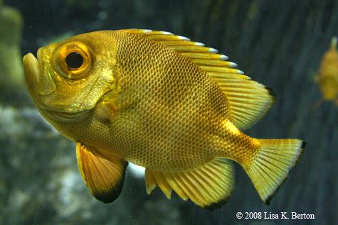fishcloseup.jpg