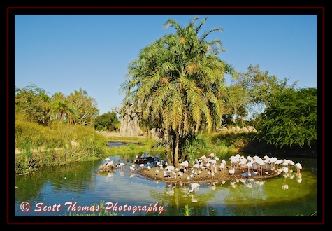 Flamingo island on the Kilimanjaro Safari in Disney's Animal Kingdom, Walt Disney World, Orlando, Florida