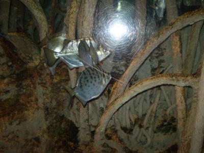 flashfish.jpg
