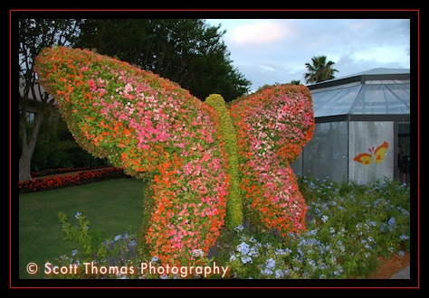 Butterfly topiary at Epcot's Flower & Garden Festival, Walt Disney World, Orlando, Florida
