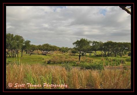 Entering the 110-acre African savannah on Disney's Animal Kingdom Kilimanjaro Safari, Walt Disney World, Orlando, Florida