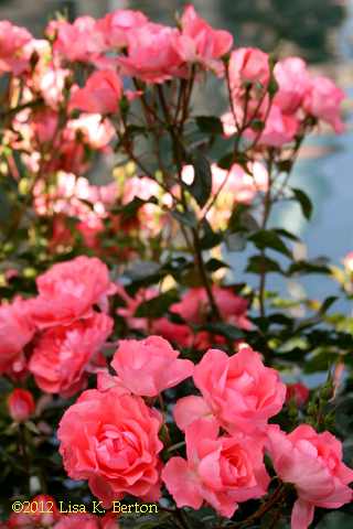 lkb-Flowers-OnceUponaDream.jpg