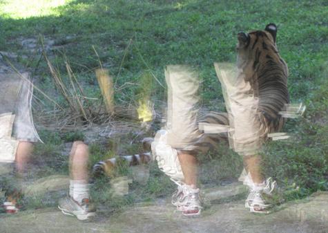 lkb-GlassTiger-legs.jpg