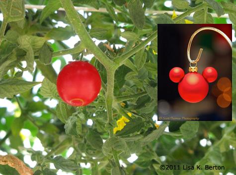 lkb-SeedsTour-Tomato2.jpg