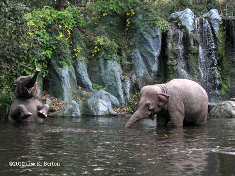 lkb-jungle-elephants.jpg