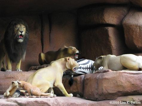 lkb-jungle-sleeping.jpg
