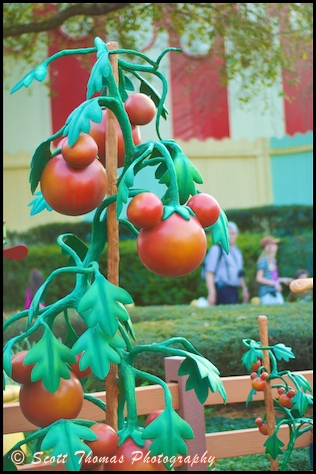 Mickey shaped tomatos in Mickey's Country House garden in Toontown Fair in the Magic Kingdom, Walt Disney World, Orlando, Florida.