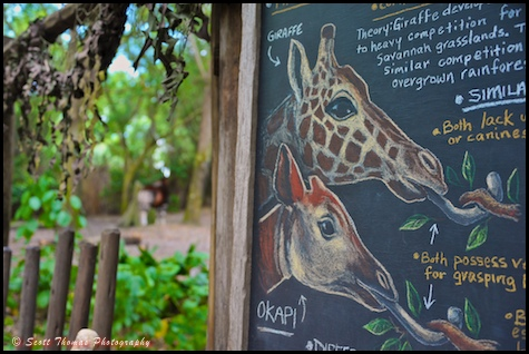 Educational blackboard on the Pangani Forest Exploration Trail in Disney's Animal Kingdom, Walt Disney World, Orlando, Florida.