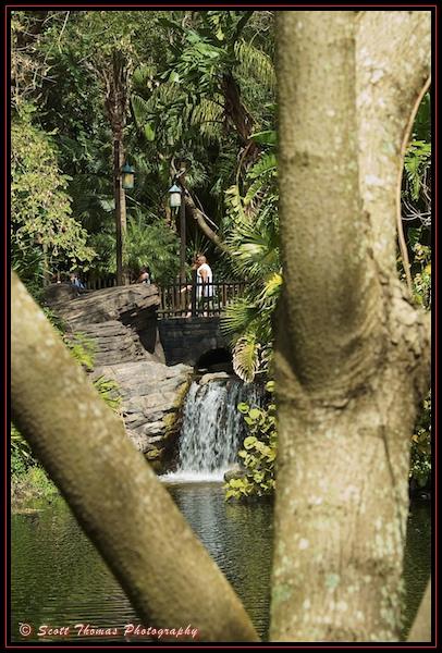 A waterfall at Disney's Animal Kingdom, Walt Disney World, Orlando, Florida