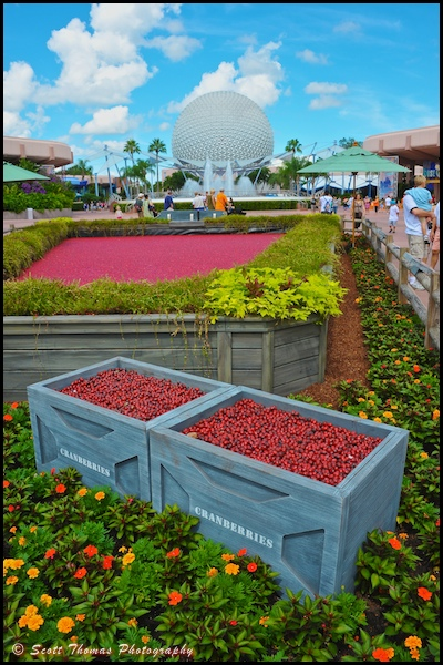 Ocean Spray's Cranberry Bog Exhibit at Epcot, Walt Disney World, Orlando, Florida.