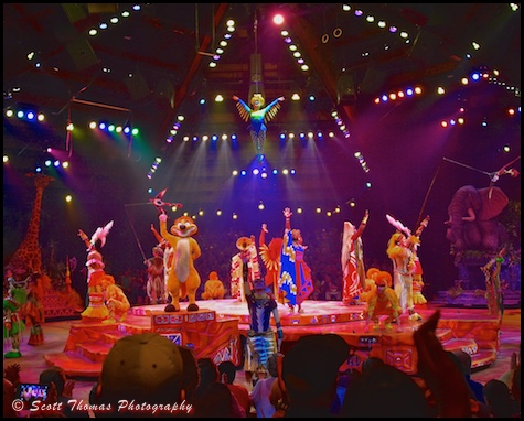 Festival of the Lion King finale in Disney's Animal Kingdom, Walt Disney World, Orlando, Florida