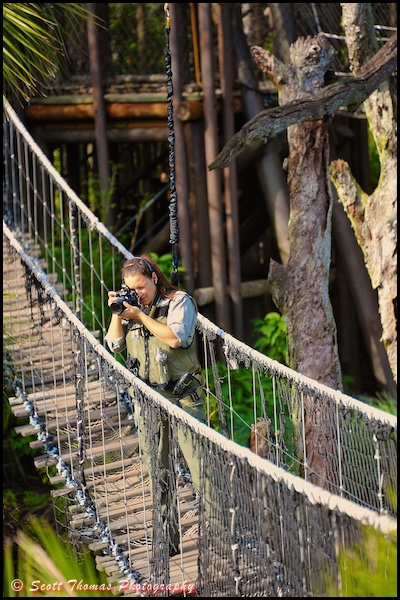 A Cast Member photographing during the Wild Africa Trek in Disney's Animal Kingdom, Walt Disney World, Orlando, Florida