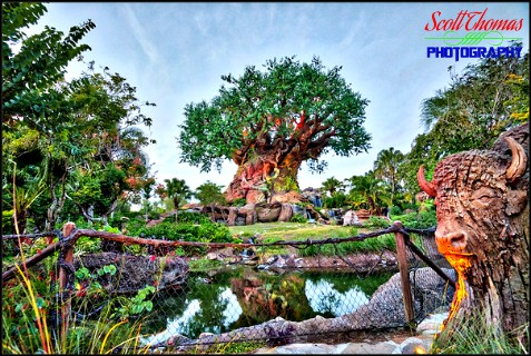 Tree of Life in HDR at Disney's Animal Kingdom, Walt Disney World, Orlando, Florida