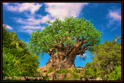 The Tree Of Life in Disney's Animal Kingdom, Walt Disney World, Orlando, Florida