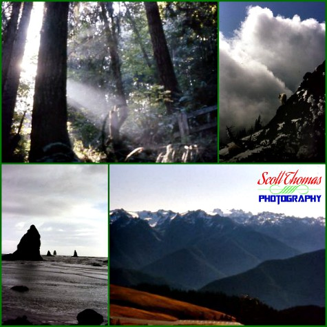 Collage of photos from Olympic National Park in the State of Washington