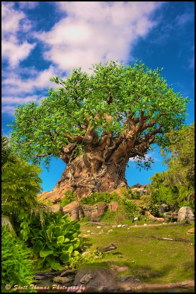 Tree of Life in Disney's Animal Kingdom, Walt Disney World, Orlando, Florida.
