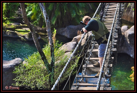Photographing from a rope bridge during the Wild Africa Trek in Disney's Animal Kingdom, Walt Disney World, Orlando, Florida.