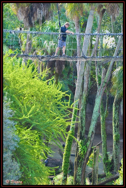 Walking over a rope bridge during the Wild Africa Trek in Disney's Animal Kingdom, Walt Disney World, Orlando, Florida.