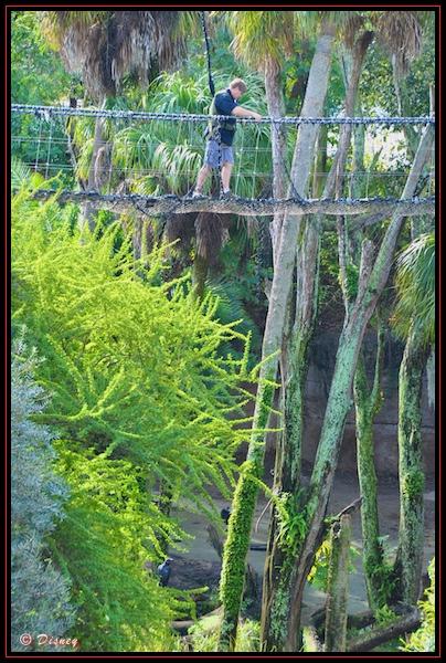 Walking over a rope bridge during the Wild Africa Trek in Disney's Animal Kingdom, Walt Disney World, Orlando, Florida.