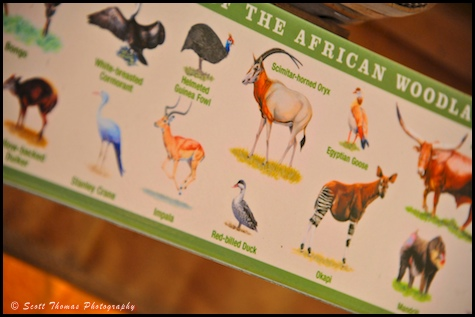 Wildlife spotting guide on the Kilimanjaro Safari in Disney's Animal Kingdom, Walt Disney World, Orlando, Florida.