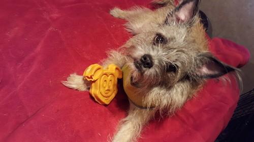 Daytona, Erin's dog